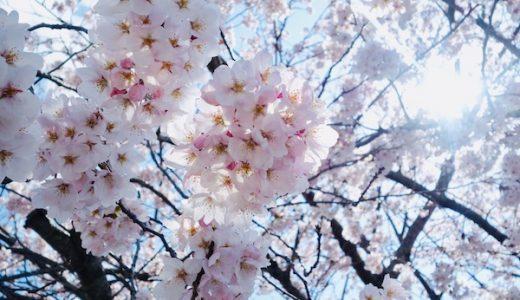 2019年春|桜を撮ってみた(SONY RX100)