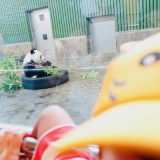 大阪からパンダに会える動物園なら神戸市立王子動物園!コアラもいるよ